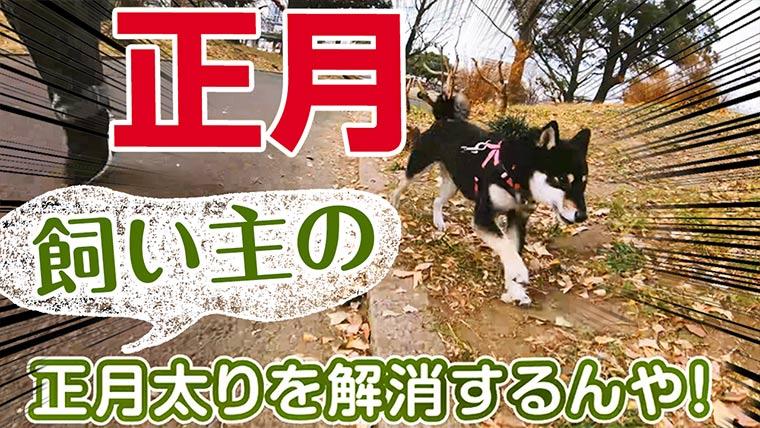 正月の柴犬