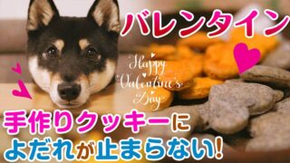 バレンタイン 犬のクッキーを手作り