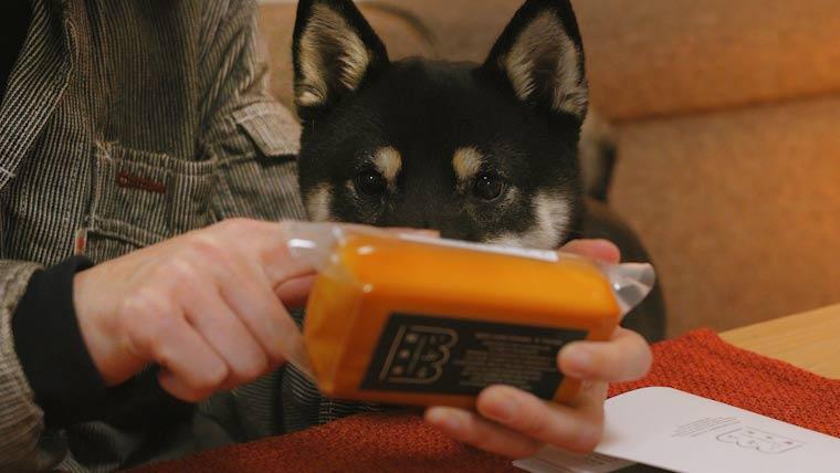 チーズを見る犬