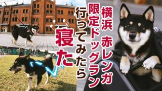 横浜 ドッグラン 犬