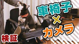 ゴープロ 犬の動画撮影 カメラ