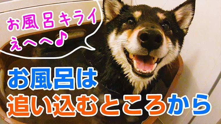 犬をお風呂に入れる