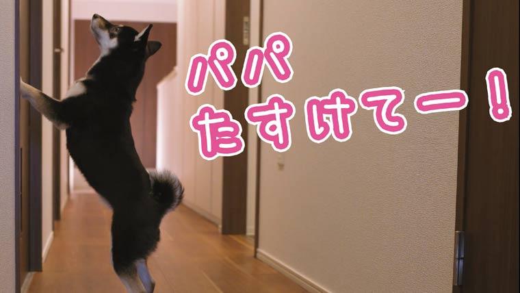 お風呂から逃げる犬