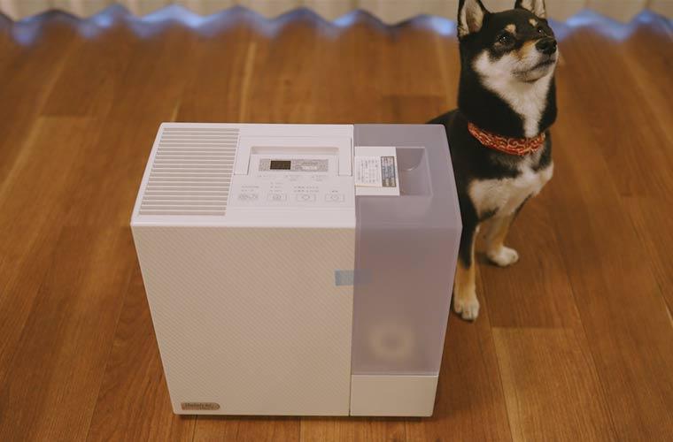 加湿器と犬