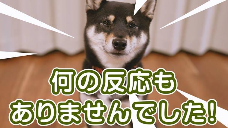 飼い主が居なくても平気な犬