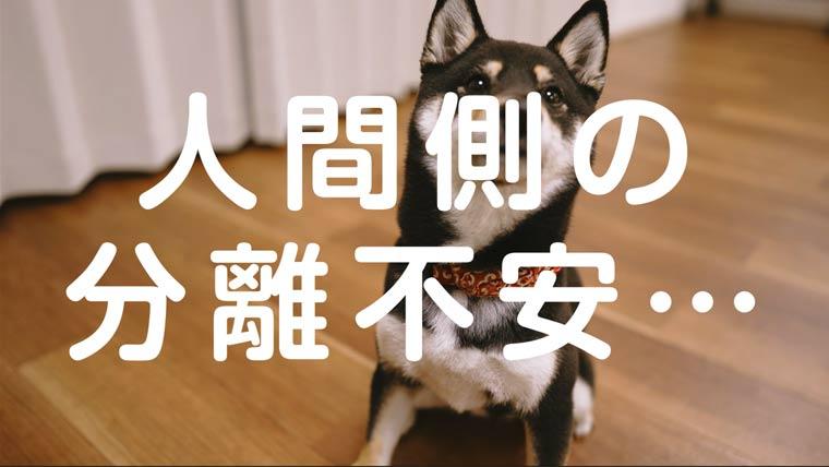 分離不安と犬の飼い主