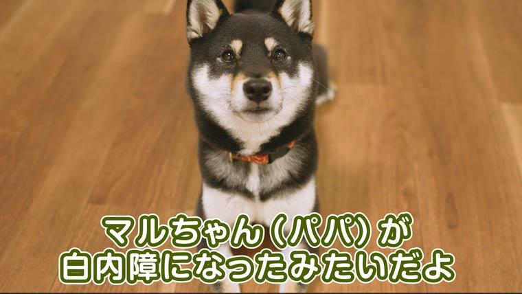 白内障と犬