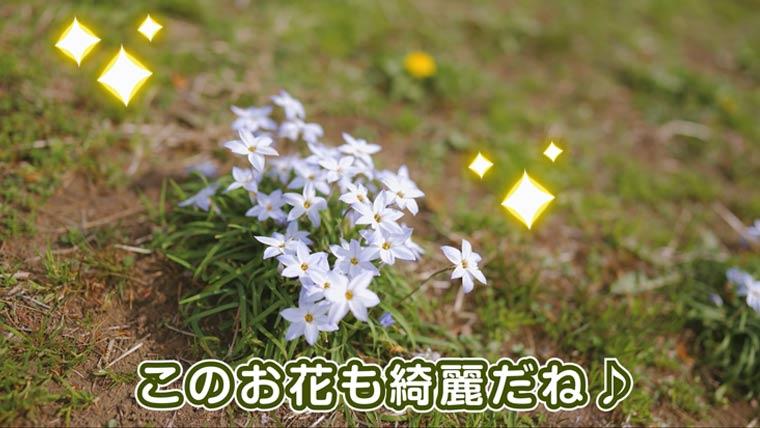綺麗な青い花 公園