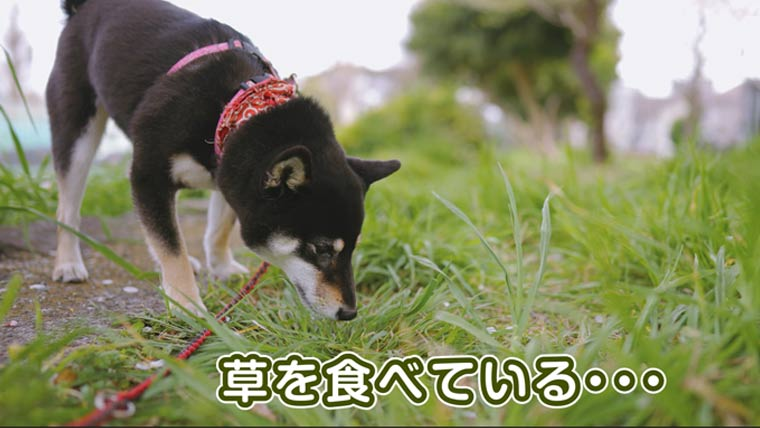サラダバーをする犬 黒柴