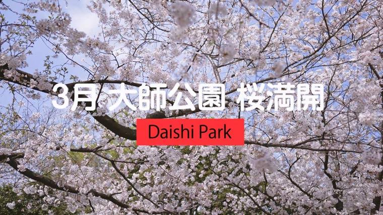 大師公園の桜 お花見