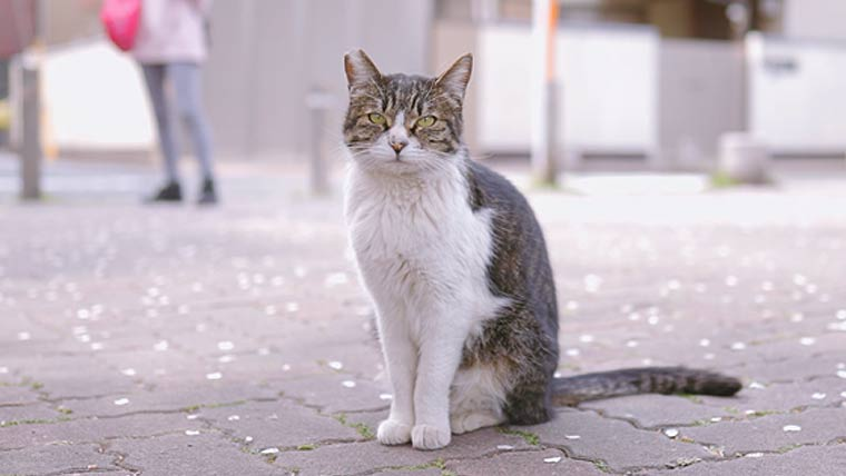 大師公園の野良猫 ネコ