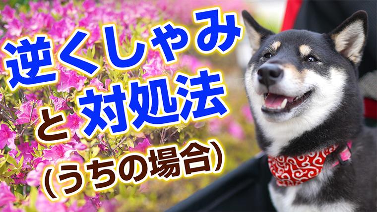 逆くしゃみ 犬の逆クシャミと対処法