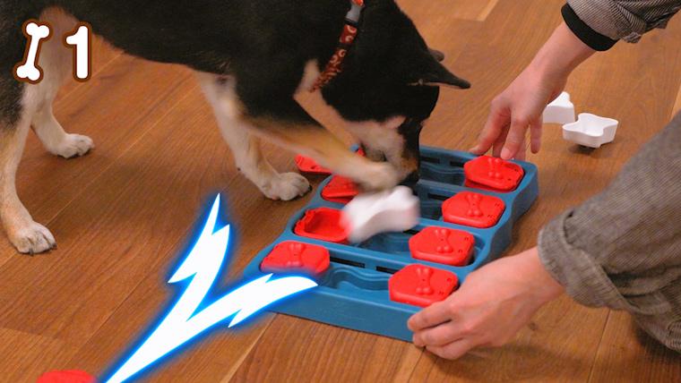 知育トイで遊ぶ犬