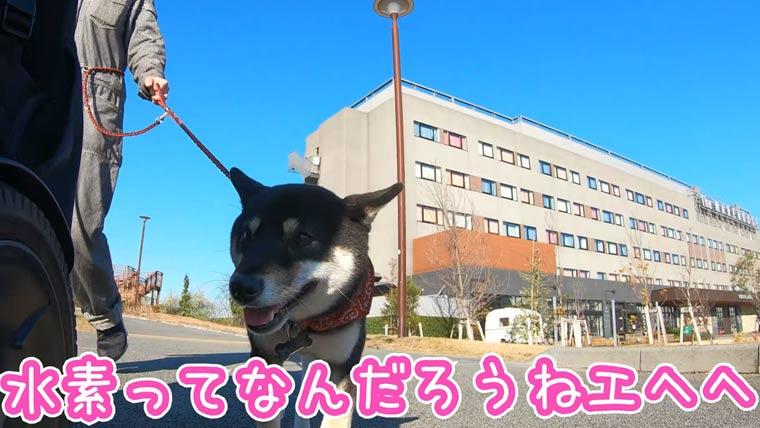 東急レイホテル REIホテル 犬