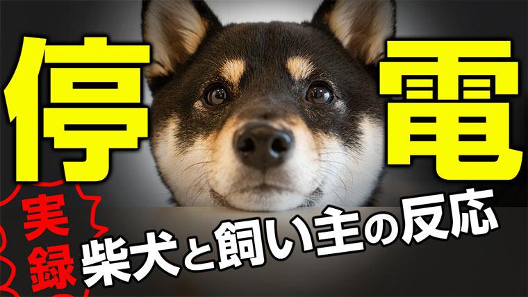 停電と犬と飼い主