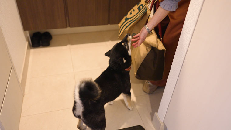 おばあちゃんと柴犬