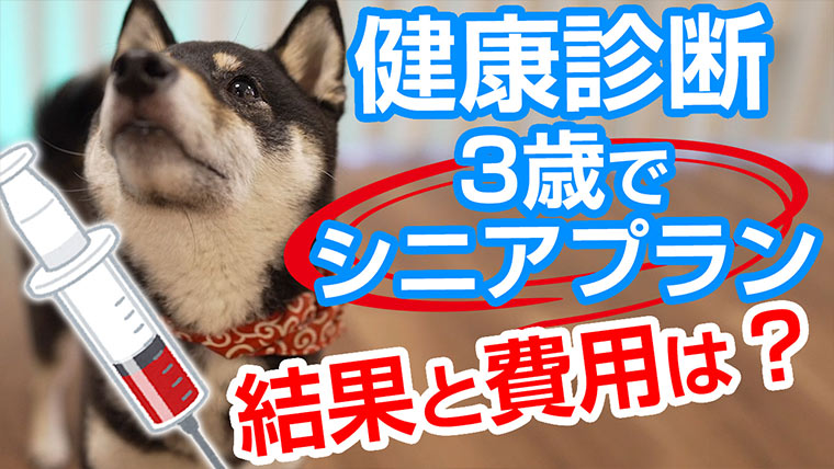 犬の健康診断 柴犬