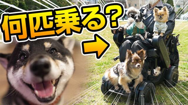 車椅子と犬 柴犬