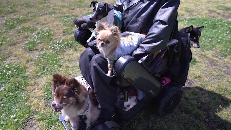 電動車椅子に犬を乗せる